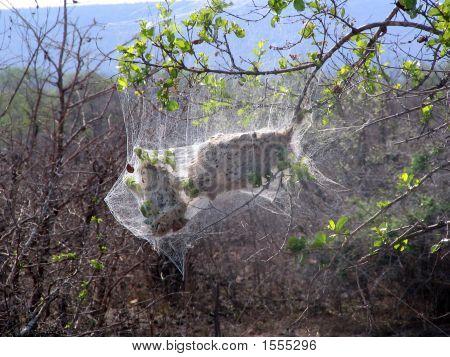 Spidernest social