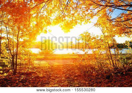 autumn trees on sun in park