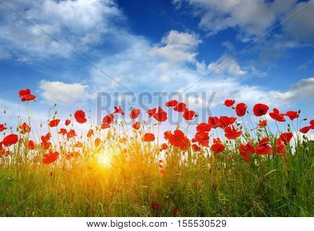 Red poppies on field, sky and clouds