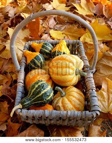 Rustic Basket Of Yellow And Green Ornamental Gourds