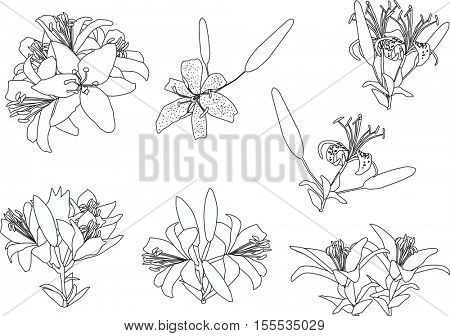 illustration with black lily flowers silhouettes isolated on white background
