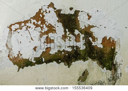 Green mold fungus and peeling and flaking paint due to rising damp and lack of maintenance on exterior wall