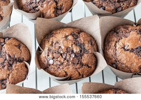 Freshly baked chocolate chip muffins on baking rack.