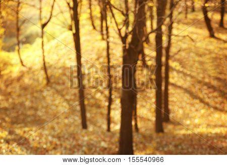 Blurred autumn park background