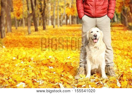 Funny labrador retriever with owner in beautiful autumn park on sunny day