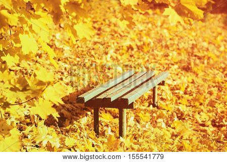 Wooden bench at autumn park