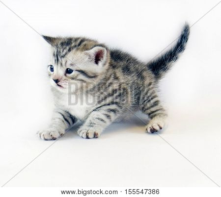 kitten play. cute kitten small striped. cat