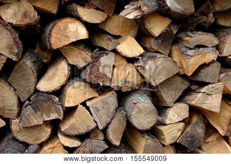 Many felled and harvested for winter firewood.