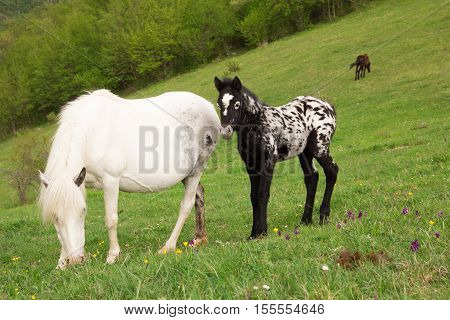 Portrait of Grazing horses in a meadow