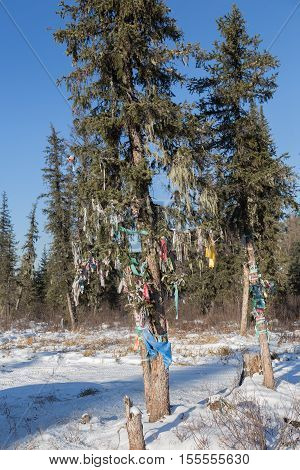 Shaman-tree in winter in South Yakutia Russia