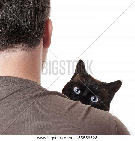 cat peeking over shoulder of unrecognizable pet owner
