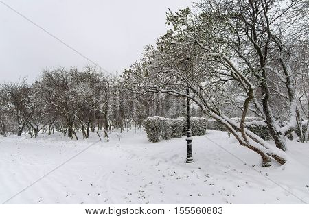 Winter alley in cold weather during snowfall