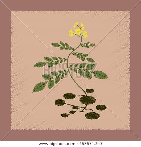 flat shading style Illustrations of plant Solanum
