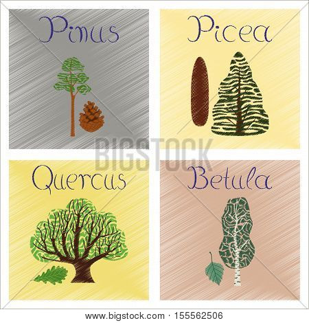 assembly flat shading style Illustrations of Pinus Picea Quercus Betula