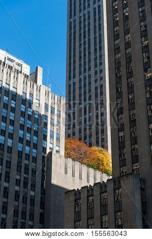 Group of New York buildings with Fall colored tress in the middle