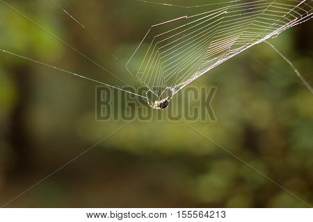 Spider on the web in the forest.