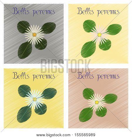 assembly flat shading style Illustrations of plant Bellis