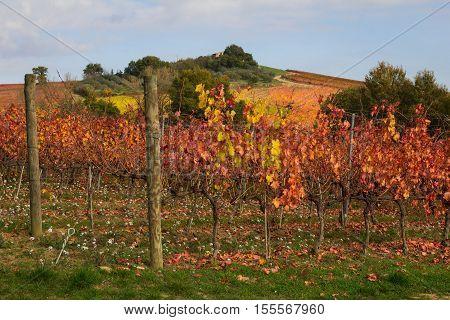 Photo of vineyard in the autumn season
