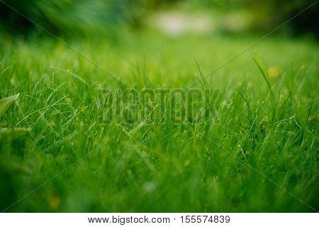 Background of a green grass. Green grass texture.