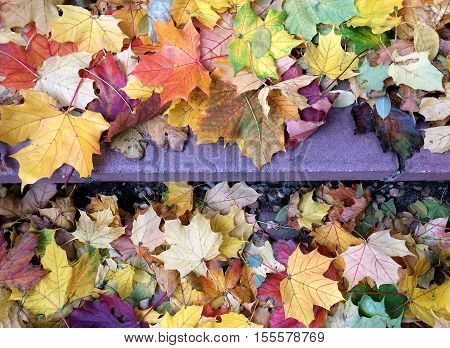 Multiple Autumn leaves lying on a set of cement steps.