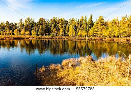 Small lake with pine trees in the Fall