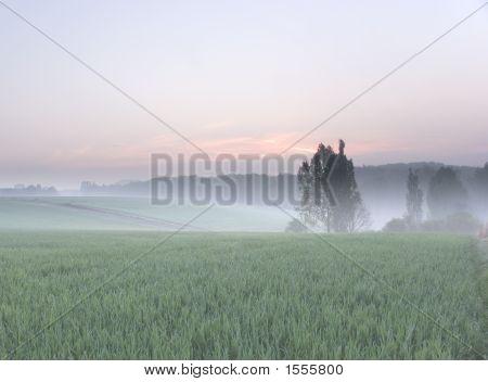 Misty Morning In Spring
