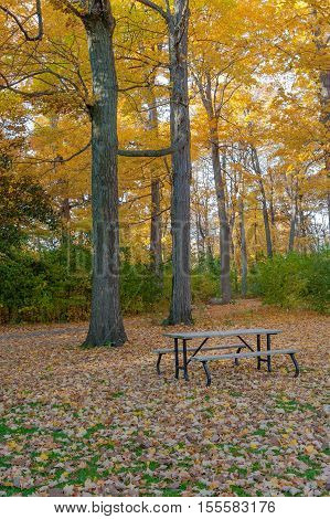 A wood picnic bench surrounded by Fall leaves at Springbank Park London Ontario Canada
