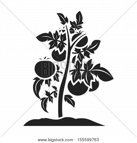 Tomato icon in black style isolated on white background. Plant symbol stock vector illustration.
