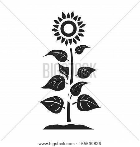 Sunflower Icon In Black Style Isolated On White Background Plant Symbol Vector Illustration