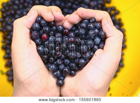 kids hands holding tasty ripe bilberries close up valentines heart shape