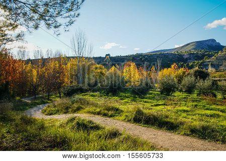 Autumn Landscape With Colorful Leaves In Caravaca De La Crus, Spain