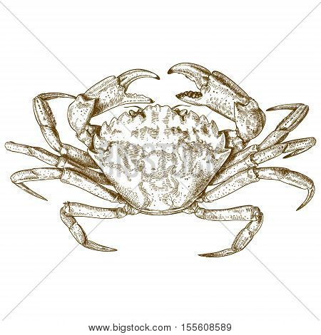 Vector antique engraving illustration of crab isolated on white background