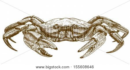 Vector engraving illustration of crab isolated on white background