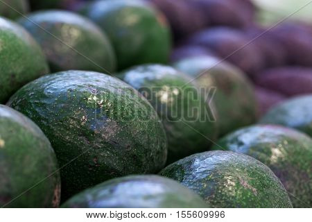 A Lot Af Green Avocados