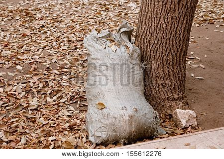 Burlap lag full of garbage standing near tree on ground covered with autumn leaves.