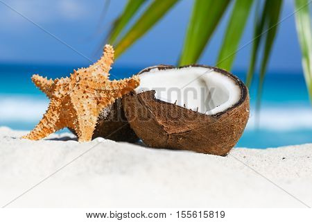 Brown Coconut And Fish Star On Sandy Beach