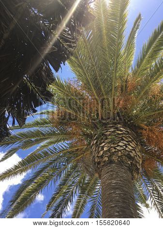 Palm sourrounded by Blue Sky on a nice sunny Day