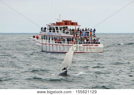 MASSACHUSETTS BAY, USA - JUL 25, 2015:Whale Watching Boat Miss Cape Ann sail on the sea near Gloucester, Massachusetts, USA.