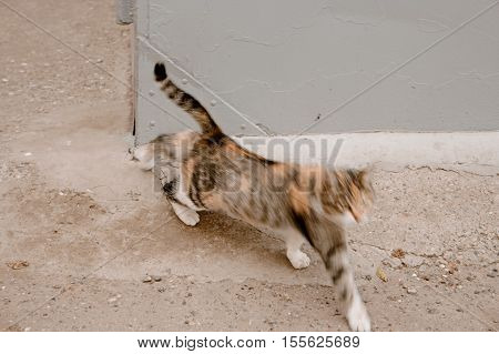 Cat stretch oneself blurred shot, cute funny cat full body shot, young playful cat outdoors
