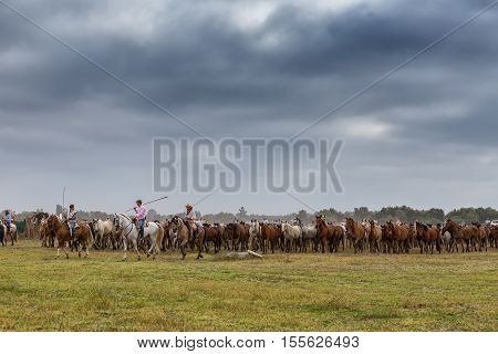 El ROCIO, ANDALUCIA, SPAIN - 26 JUNE 2016: Villagers herders lead a herd of wild horses on baptism. Spain El Rocio.