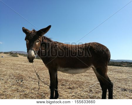 A donkey standing in an empty field in Cyprus.
