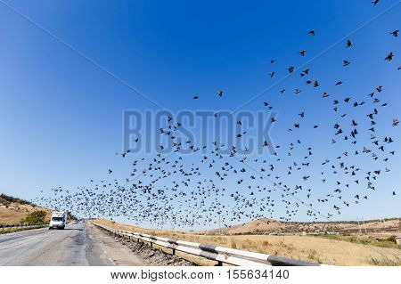 Russia. Crimea. Sudak. 13.09. 2016 View of road , with flock of birds flying in clean blue sky