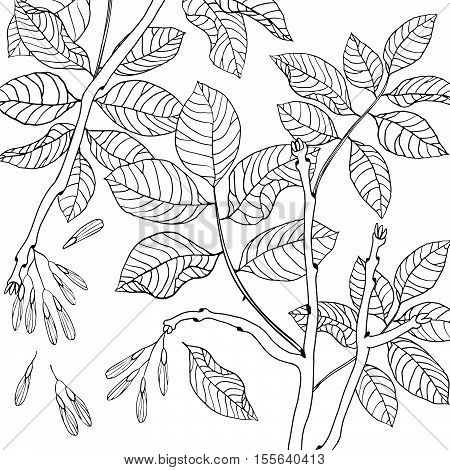 Vector hand drawn black and white floral seamless pattern of ash tree for textile, fabric, postcards, wallpaper, scrapbooking and others