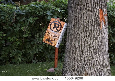Orange construction, no parking sign beside a marked, thick maple tree trunk in Montreal, Quebec, on a bight sunny day in September.