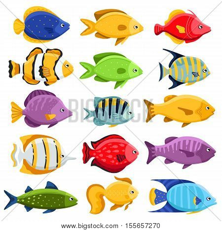 Funny fish vector characters. Colorful coral reef tropical fish set vector. Sea fish collection isolated on white background. Cartoon aquarium fish or coral reef tropical icons. Cute reef fish. Fish vector icon. Tropical sealife fauna. Exotic fish poster