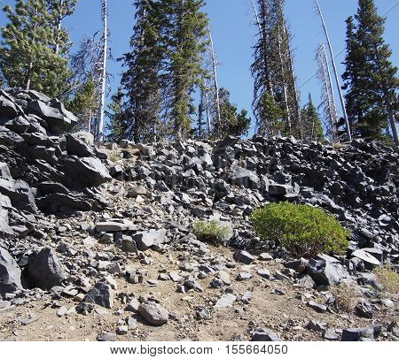 Tall pine trees grow out of a jagged hillside high up in the mountains in Oregon.