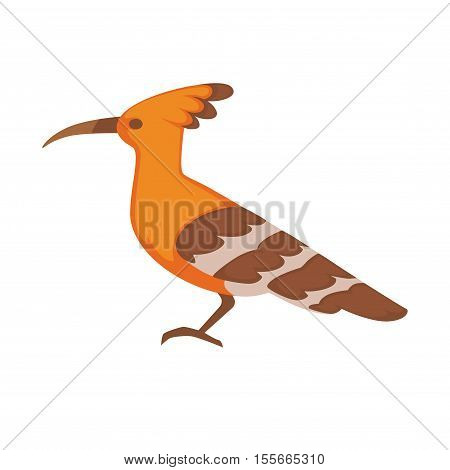 Hoopoe Vector image isolated on white background.