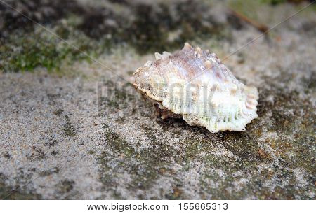 Shell On Stone