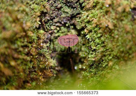 Small Brown Mushroom In Moss