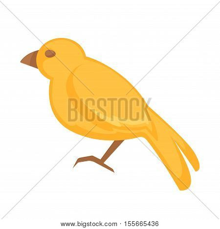 Canary bird. Vector Isolated on white background